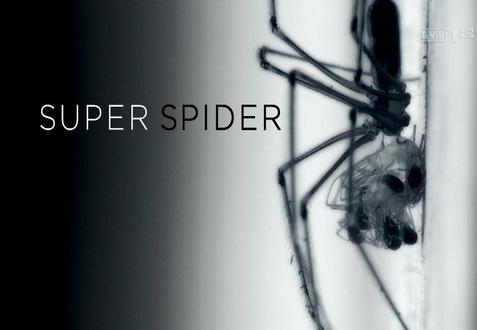 Niezwykłe pająki