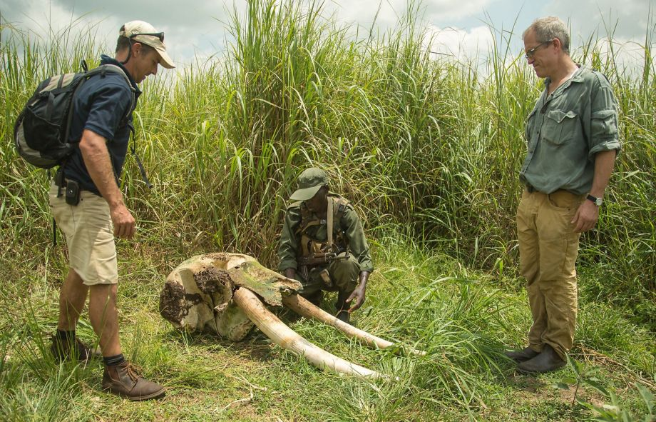 Handlarze kością słoniową