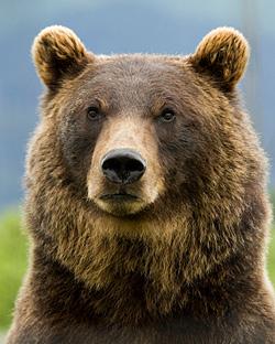 Ostatni Grizzly