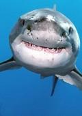 Reunion : Wyspa krwiożerczych rekinów