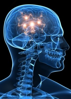 Mózg, fascynujący automat
