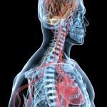 Wtajemniczeni – Mikro-podróż przez ciało